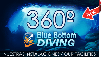 Blue Bottom Diving offer you: